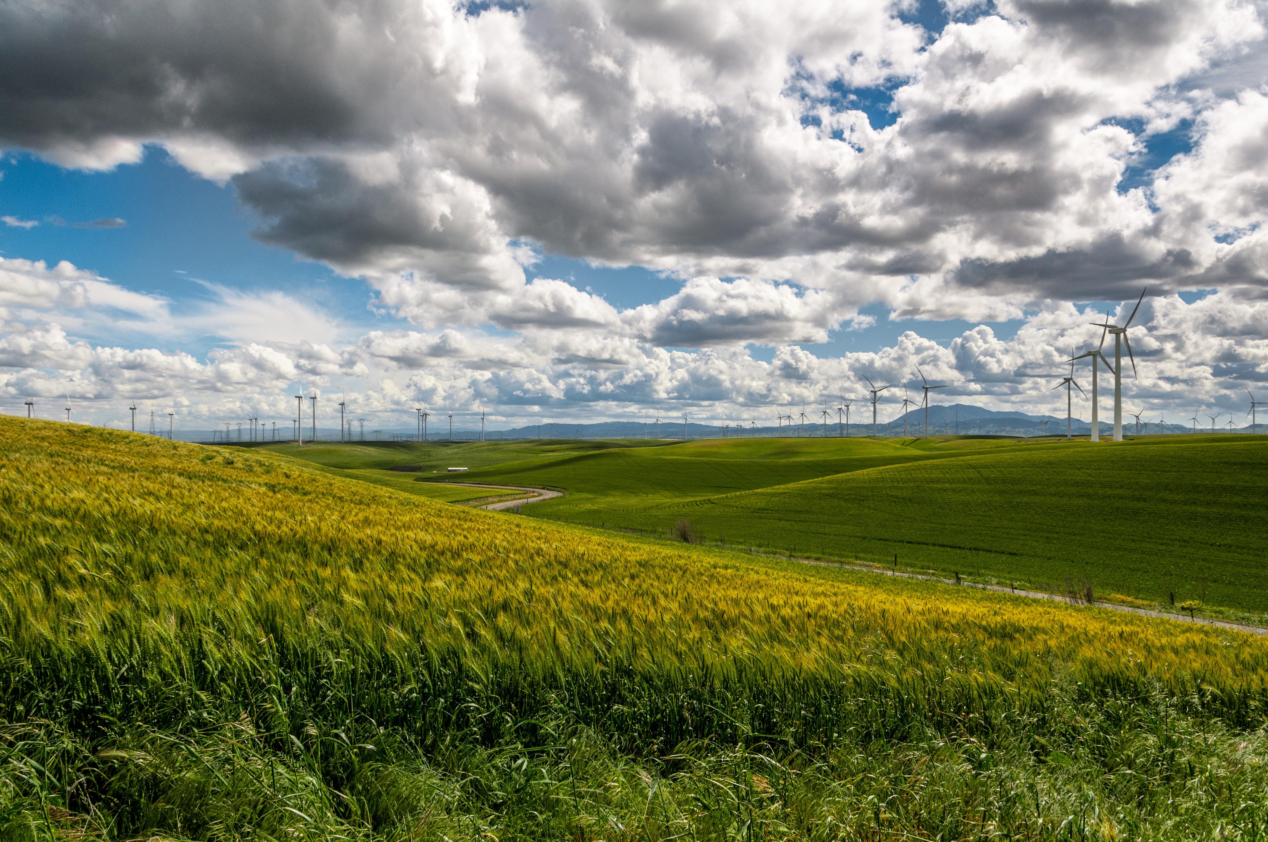 grass plain under blue sky