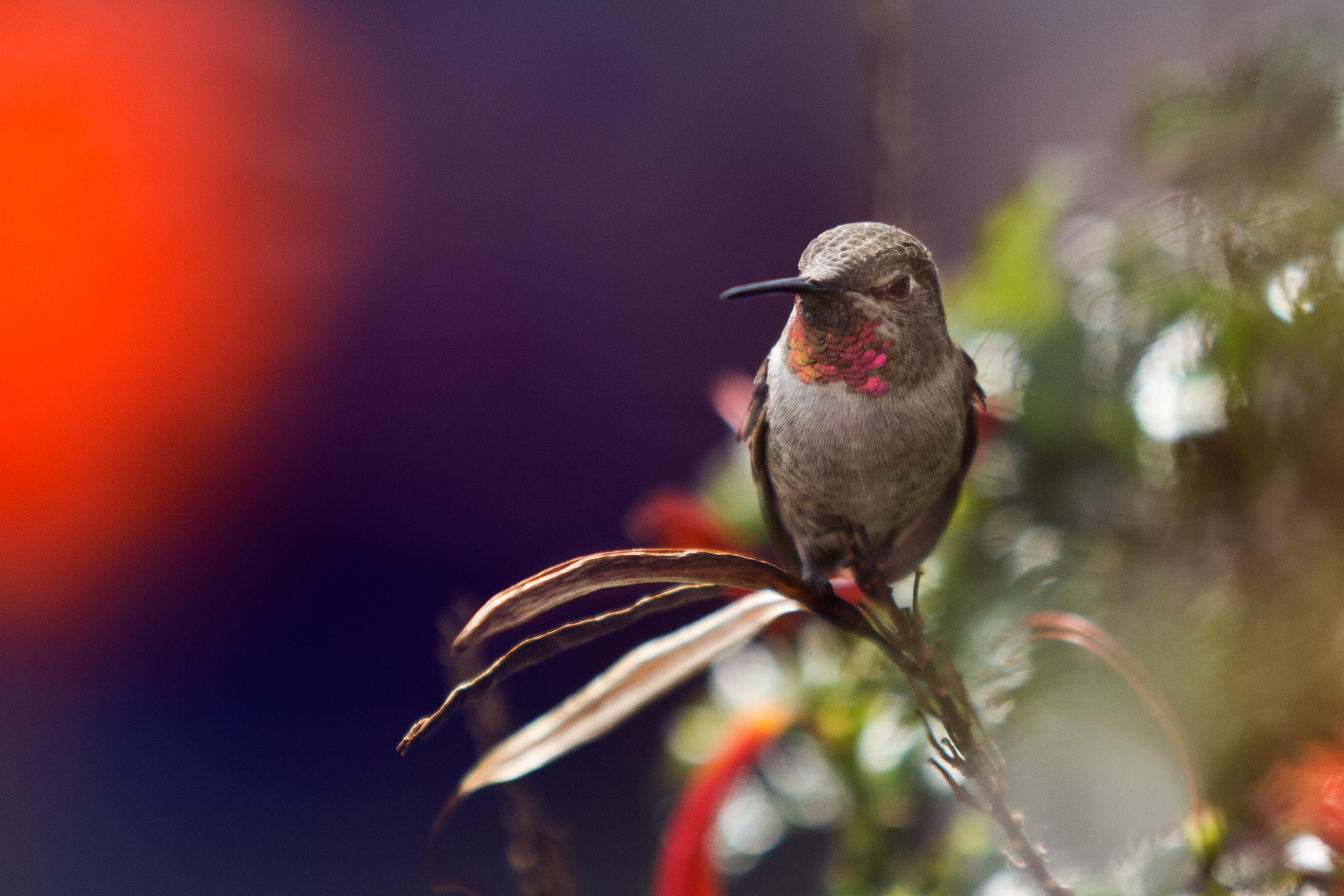 focus photo of a hummingbird on leaf