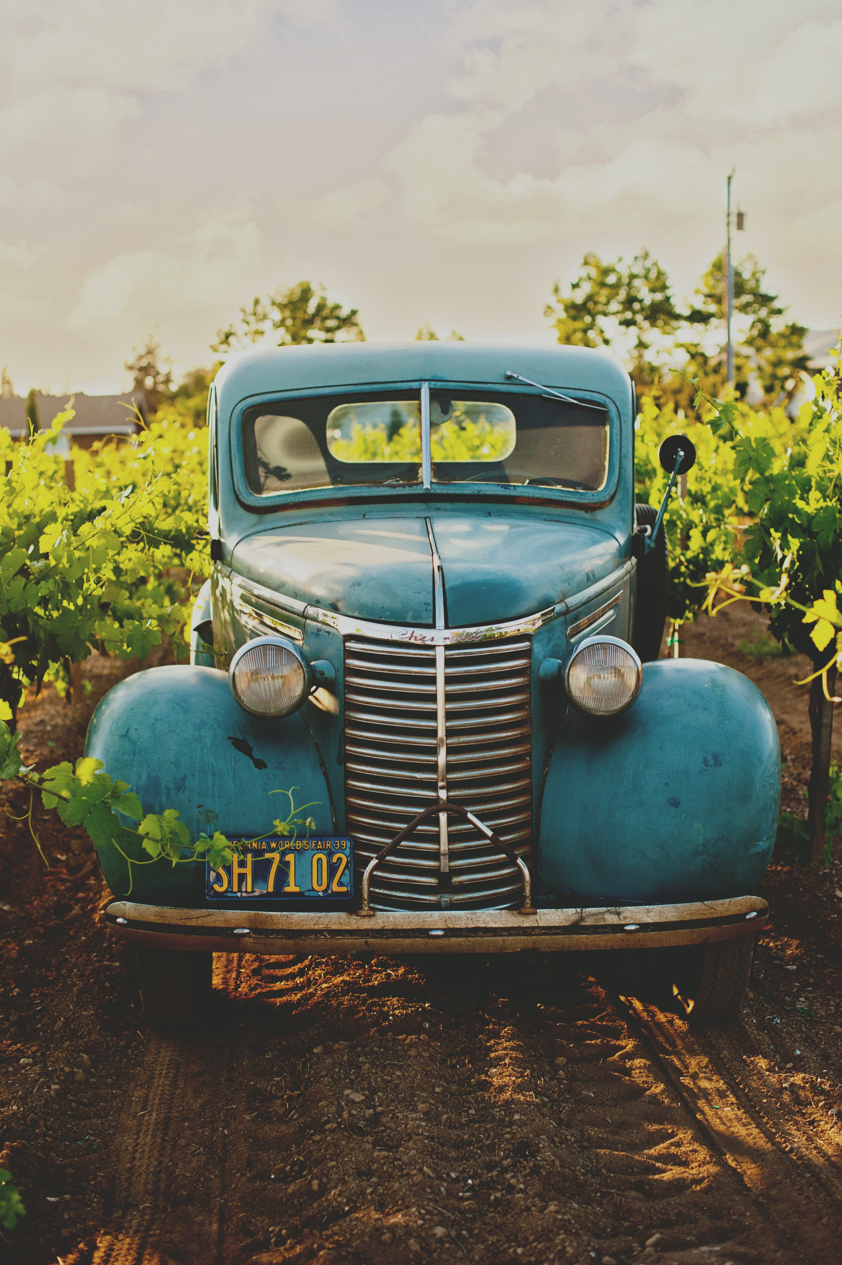 Front view of a vintage blue hot rod on a dirt road, surrounded by plants and trees.
