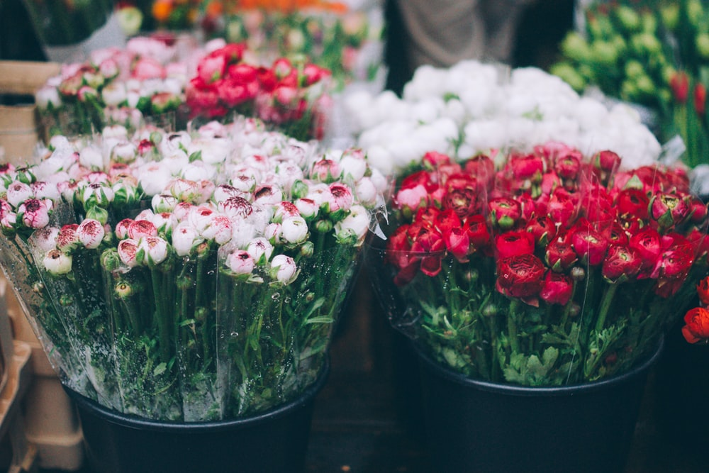 Flower bucket pictures download free images on unsplash white and red rose buds in black plastic buckets mightylinksfo
