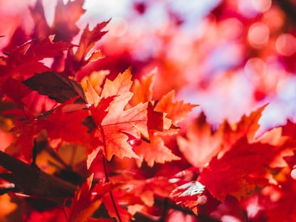 900 Fall Images Download Hd Pictures Photos On Unsplash