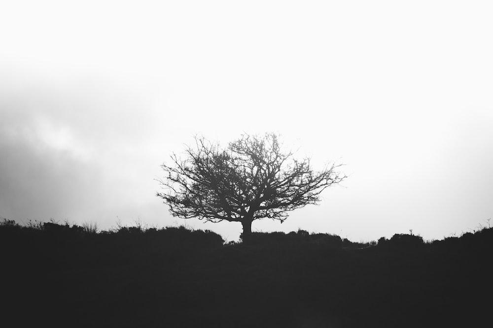 grey tress during daytime