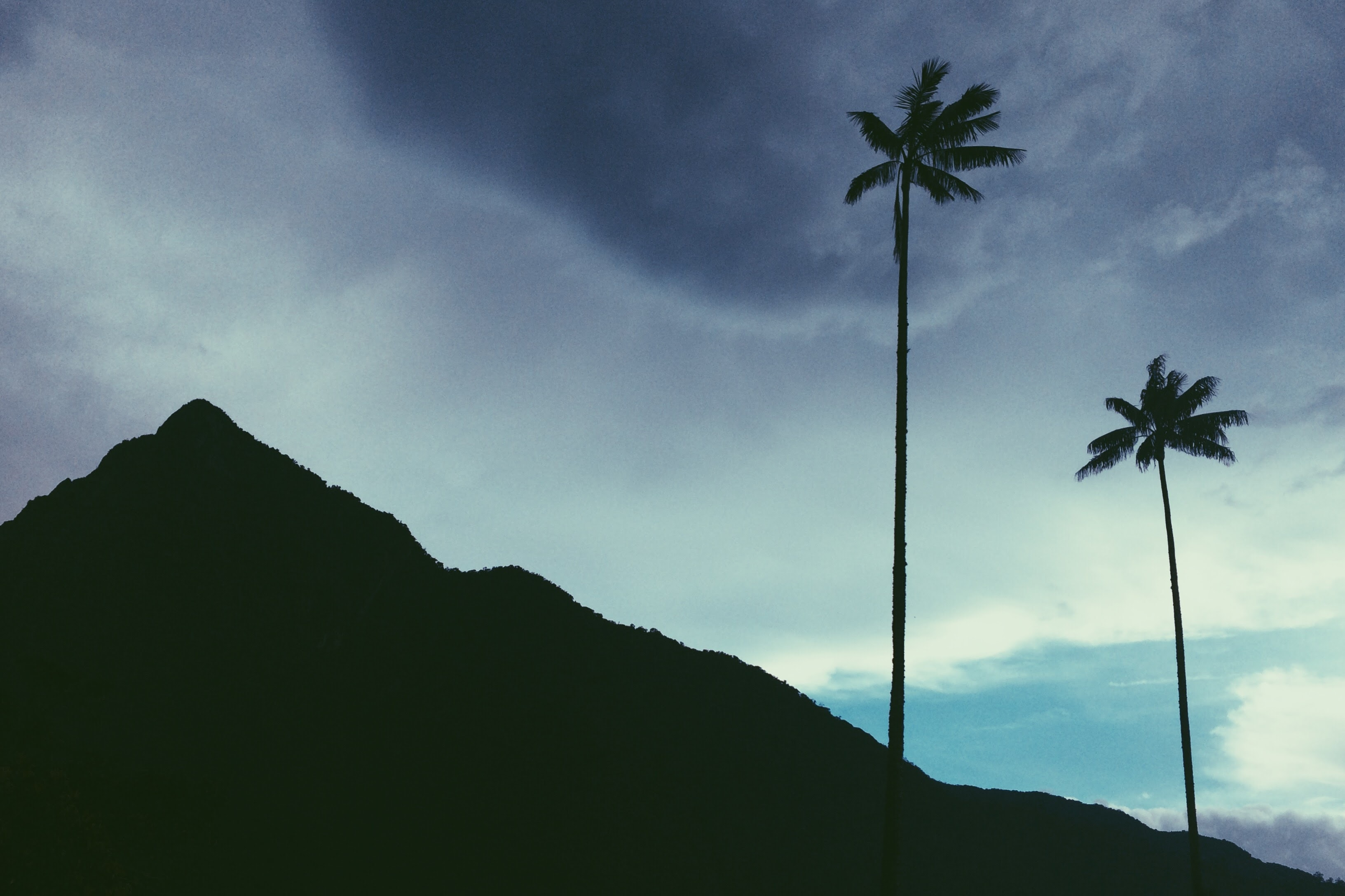 The silhouette of a mountain and palm tree against the blue sky with clouds in Valle Del Cocora