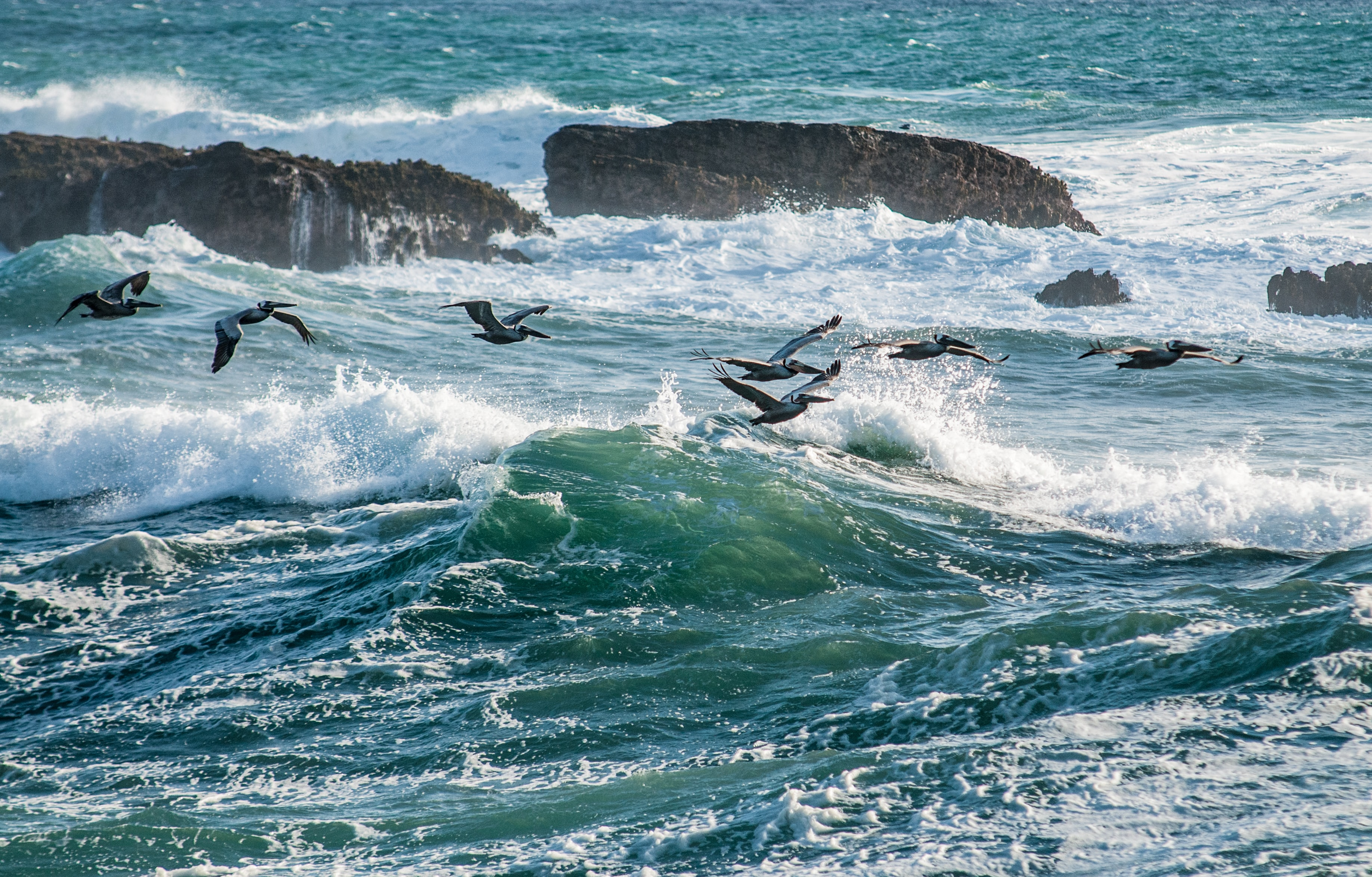 water waves and flock of birds at daytime