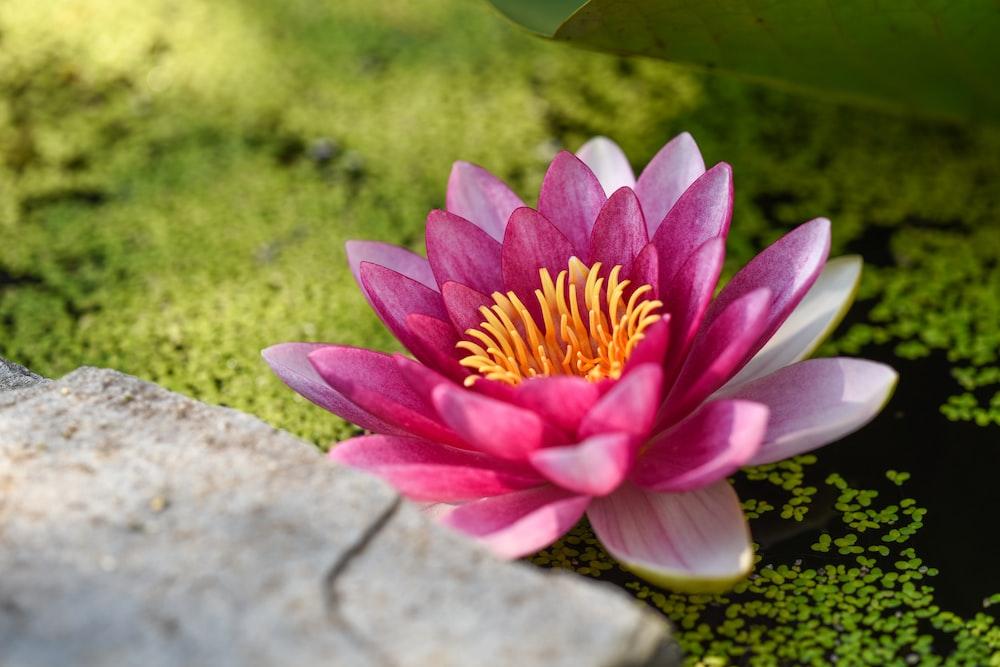 ピンクの花の浅い焦点の写真