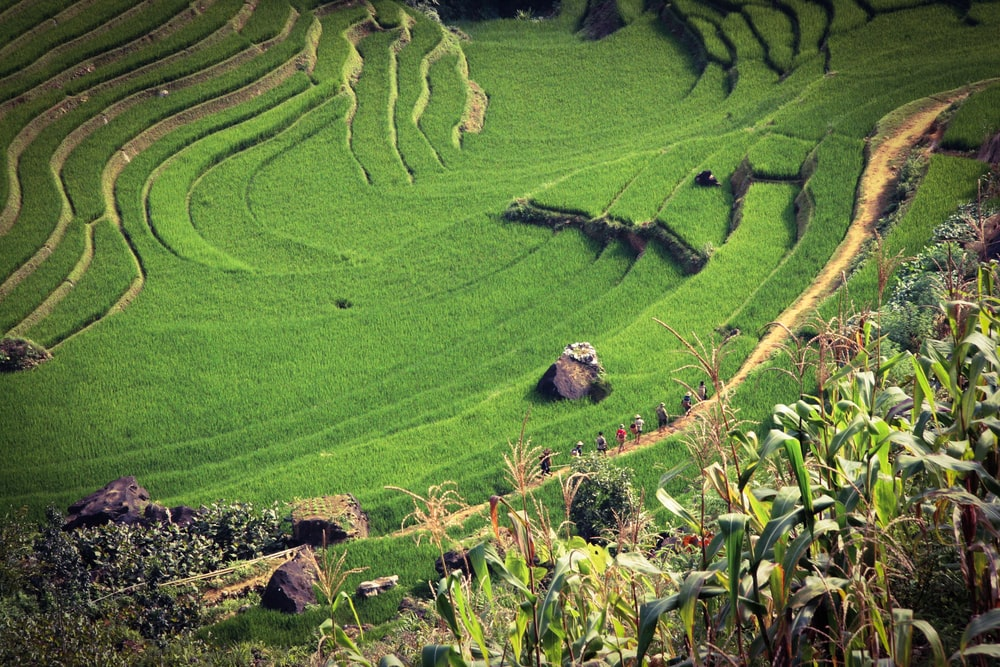 tiered rice field view during daytime