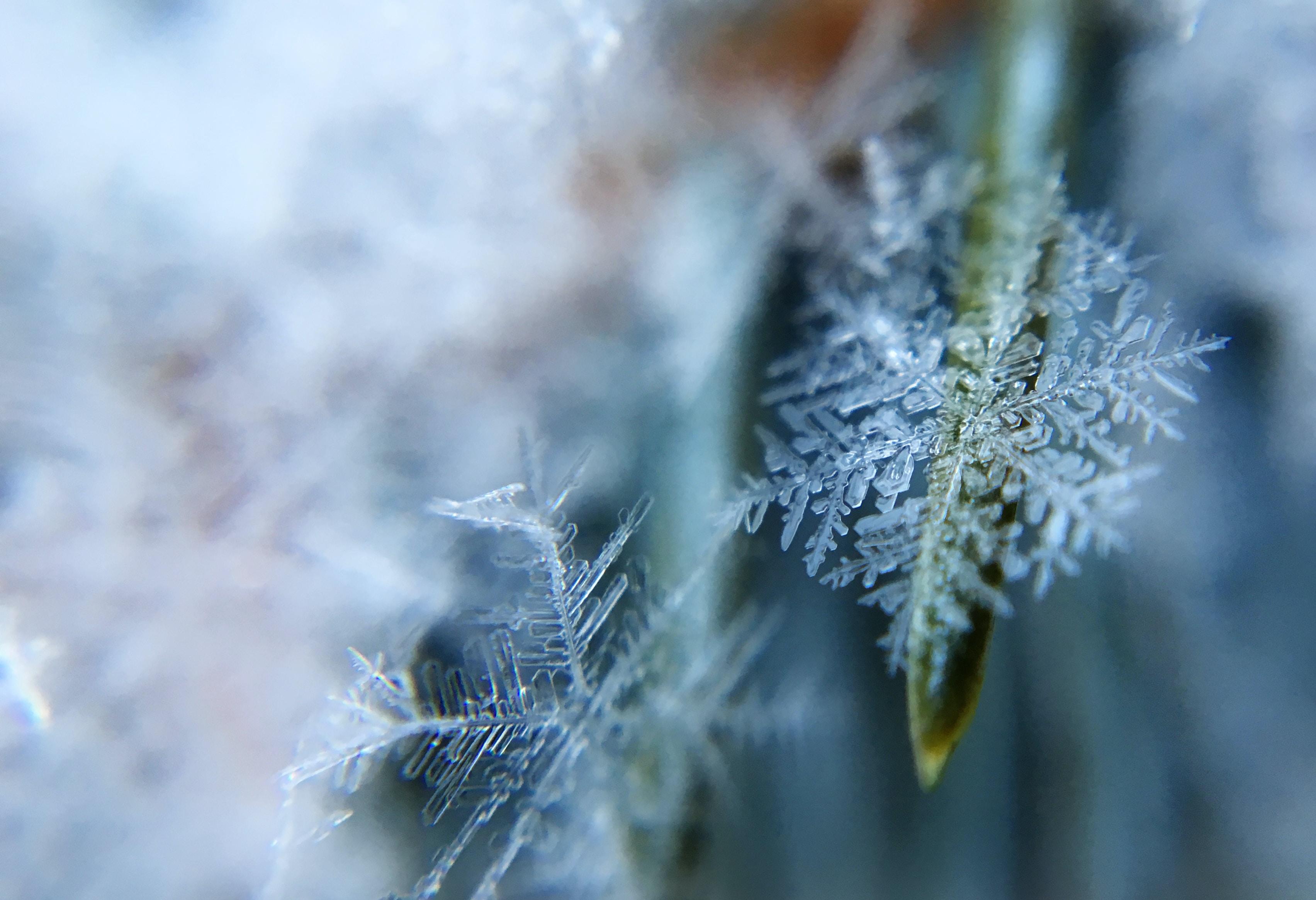 Macro shot of two snowflakes