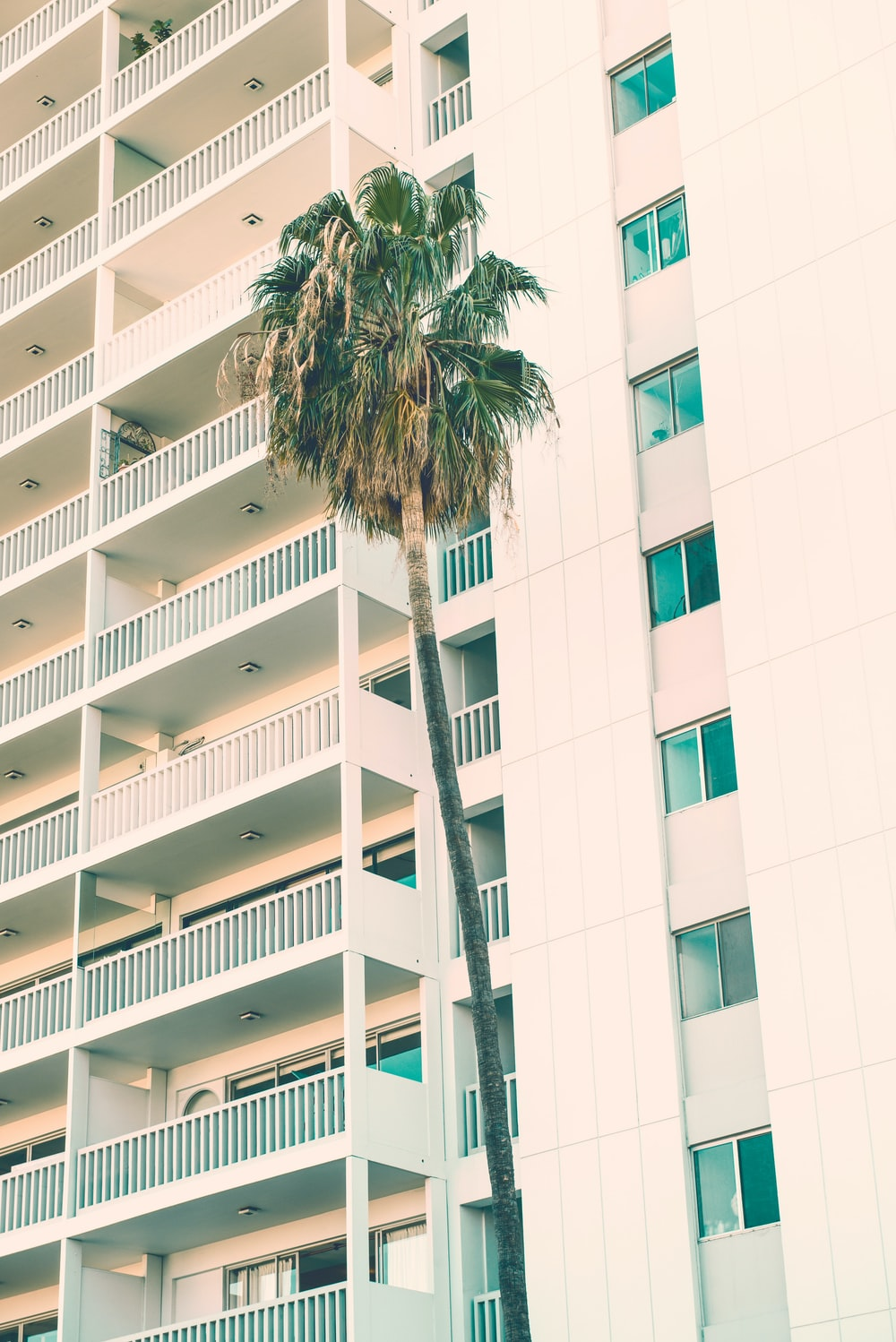 green palm tree beside white high-rise building during daytime