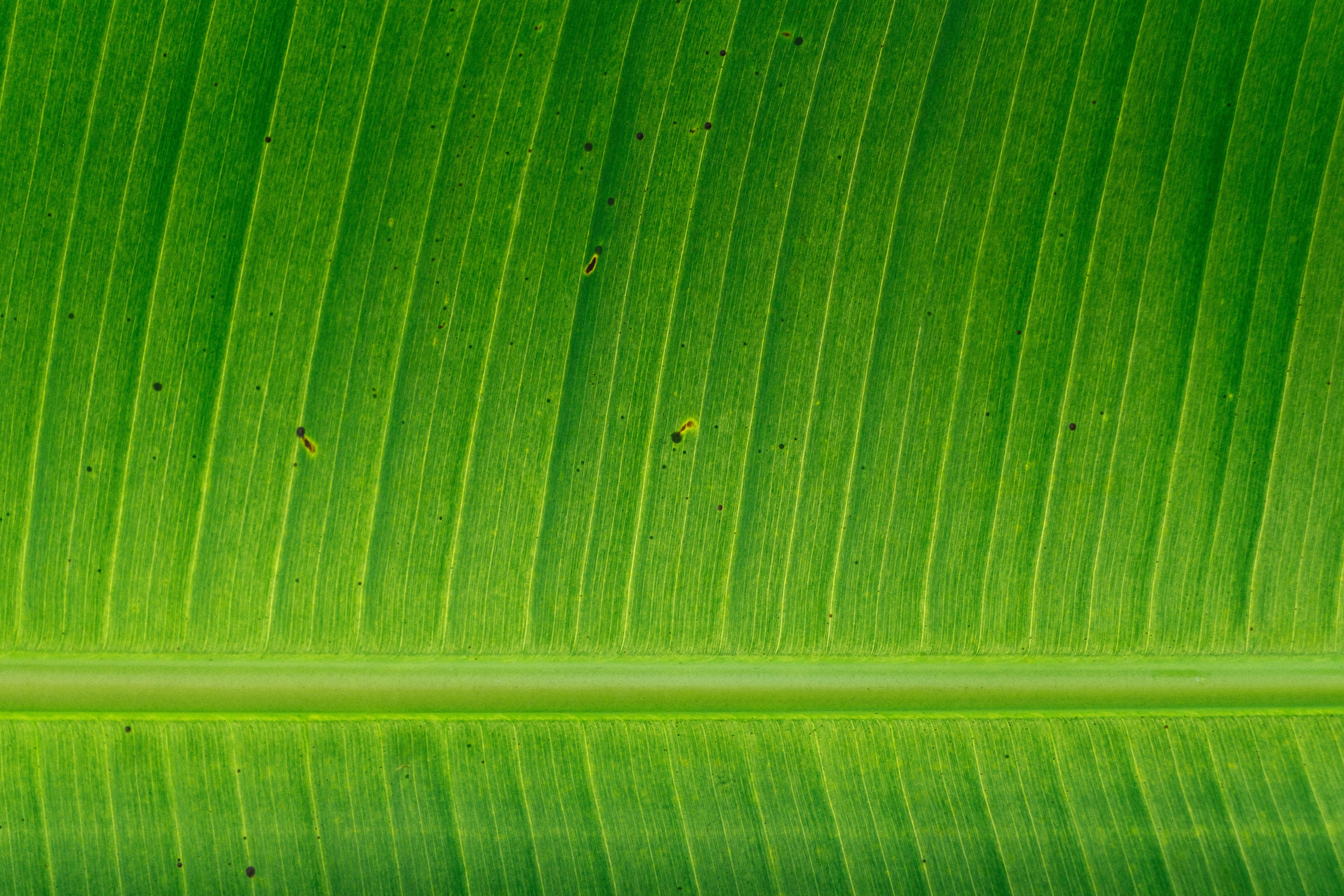 green banana left
