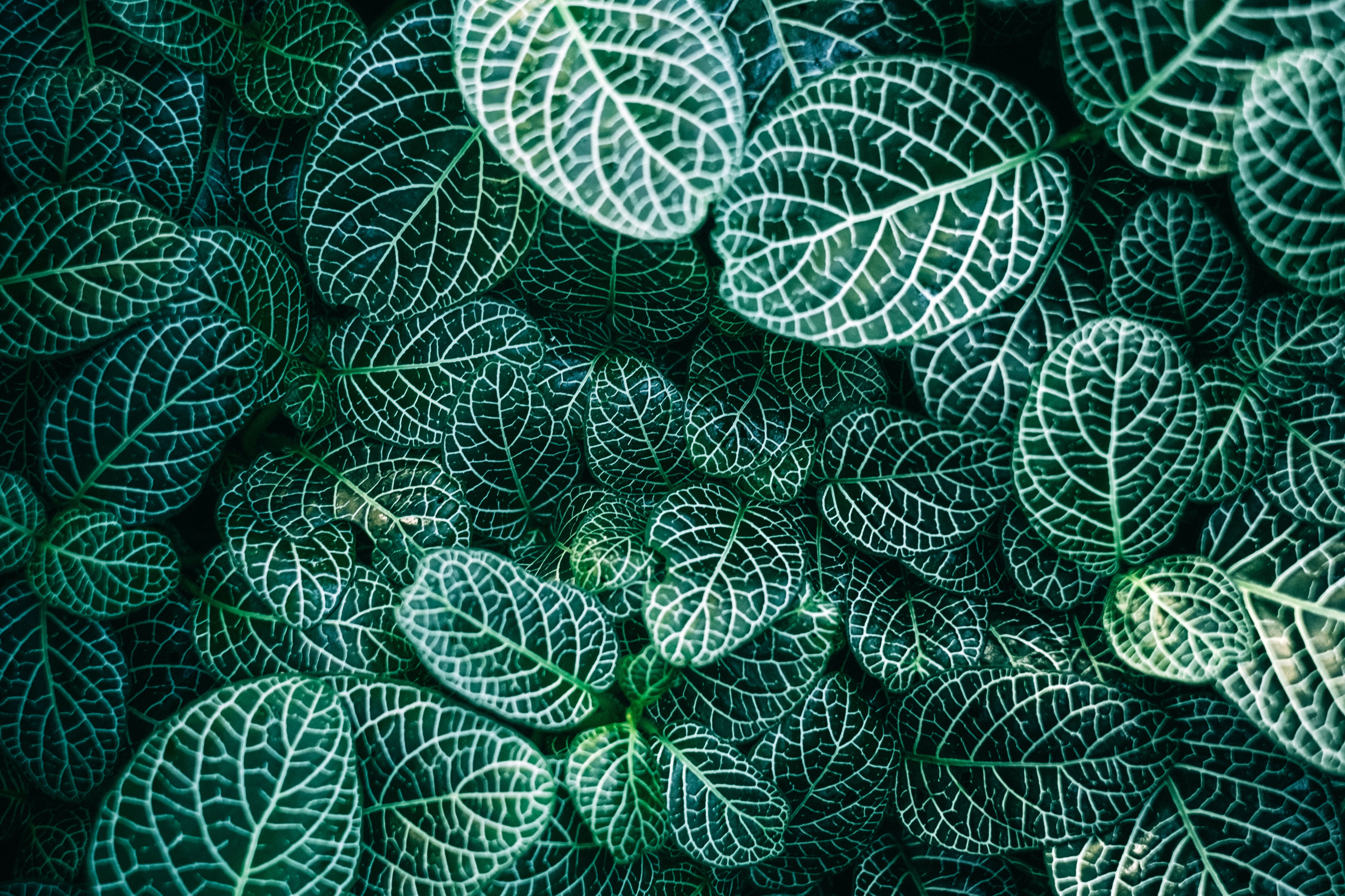 green and white leaf plants