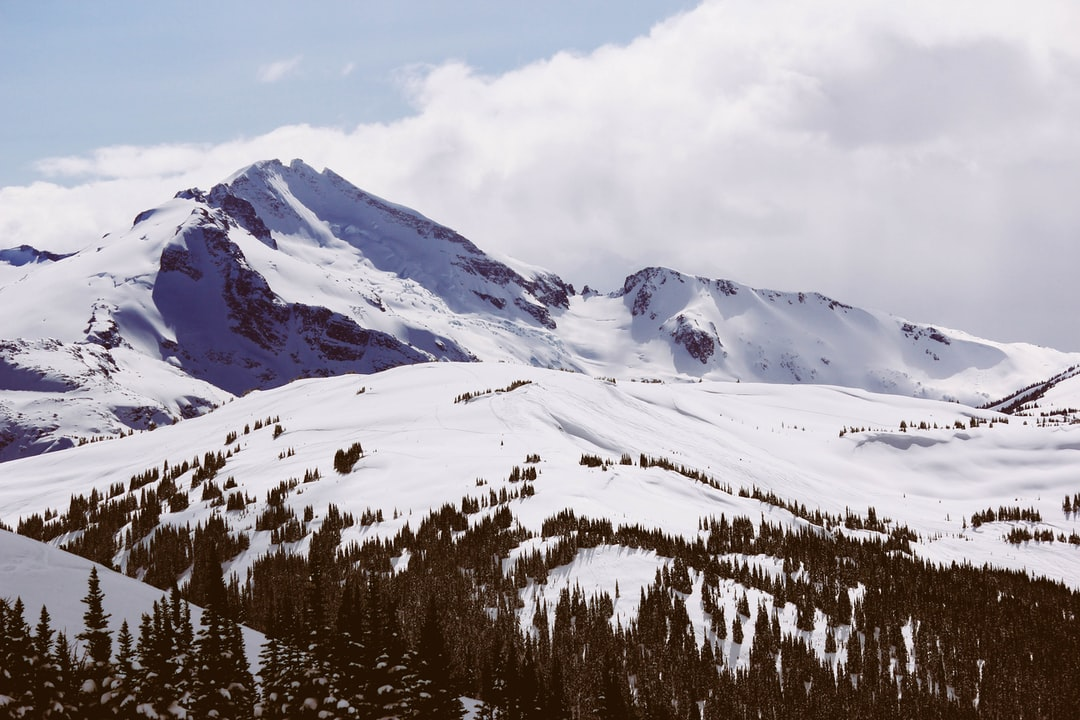 Snowy mountain top with trees