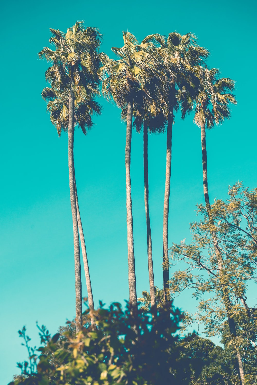 five green-and-brown palm trees