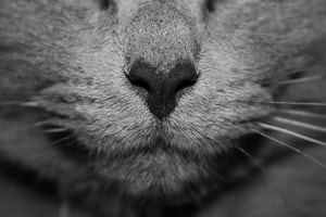 3281. Állatok