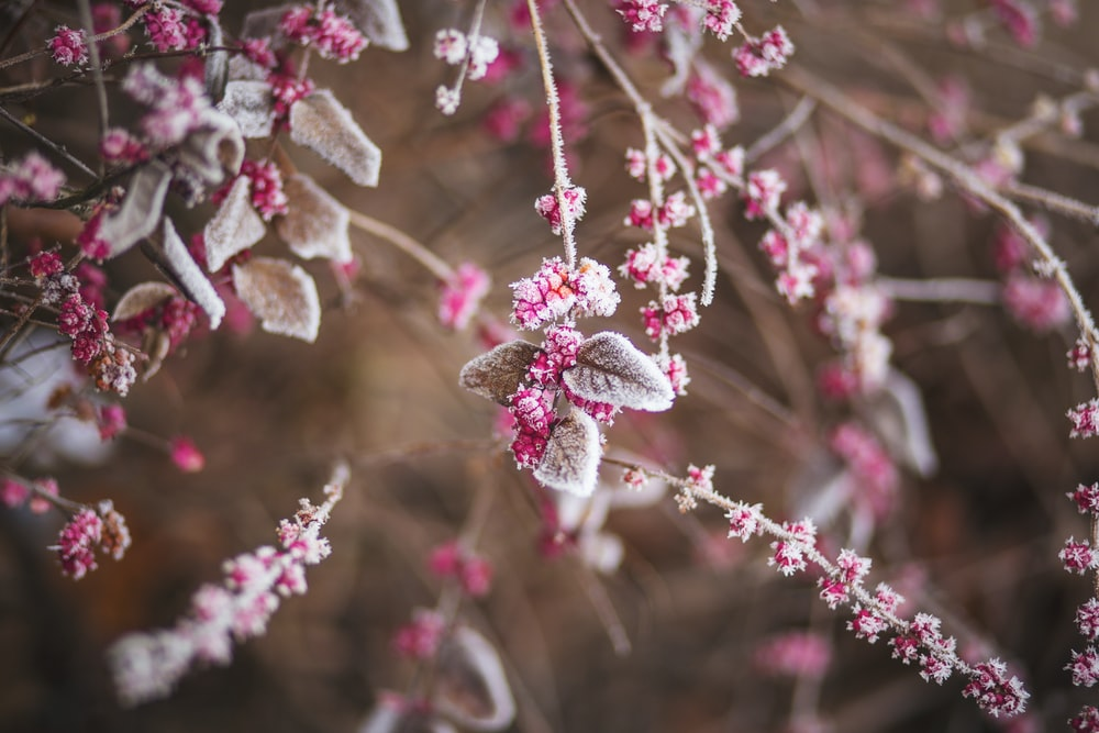 pink petaled flowers during daytime