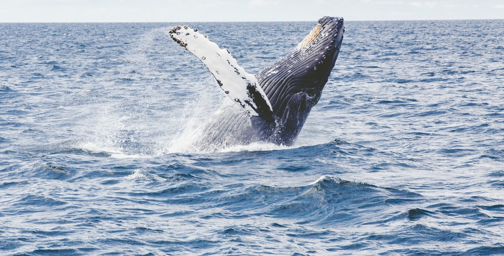 Ecuador: Cuenca-English Convention-Ecuador Branch-Whale Watching