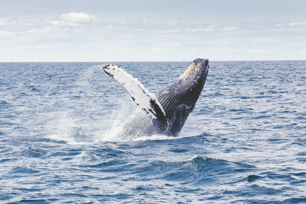 photography of whale