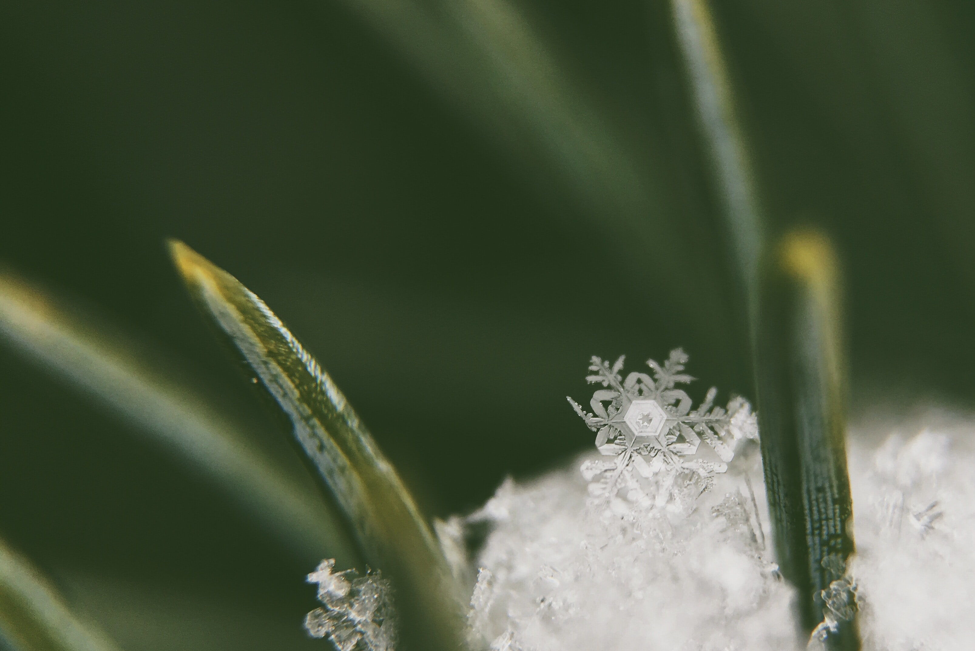Single snowflake crystal falls into a pile of ice on pine needles