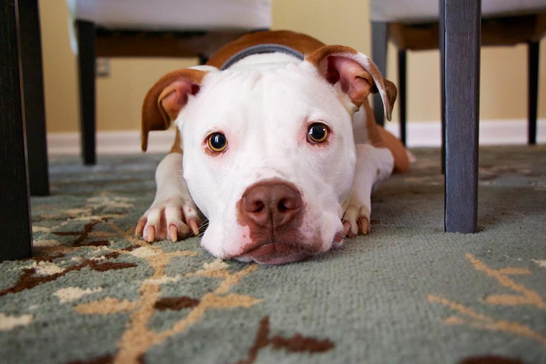 What Can I Give My Dog to Help Him Sleep