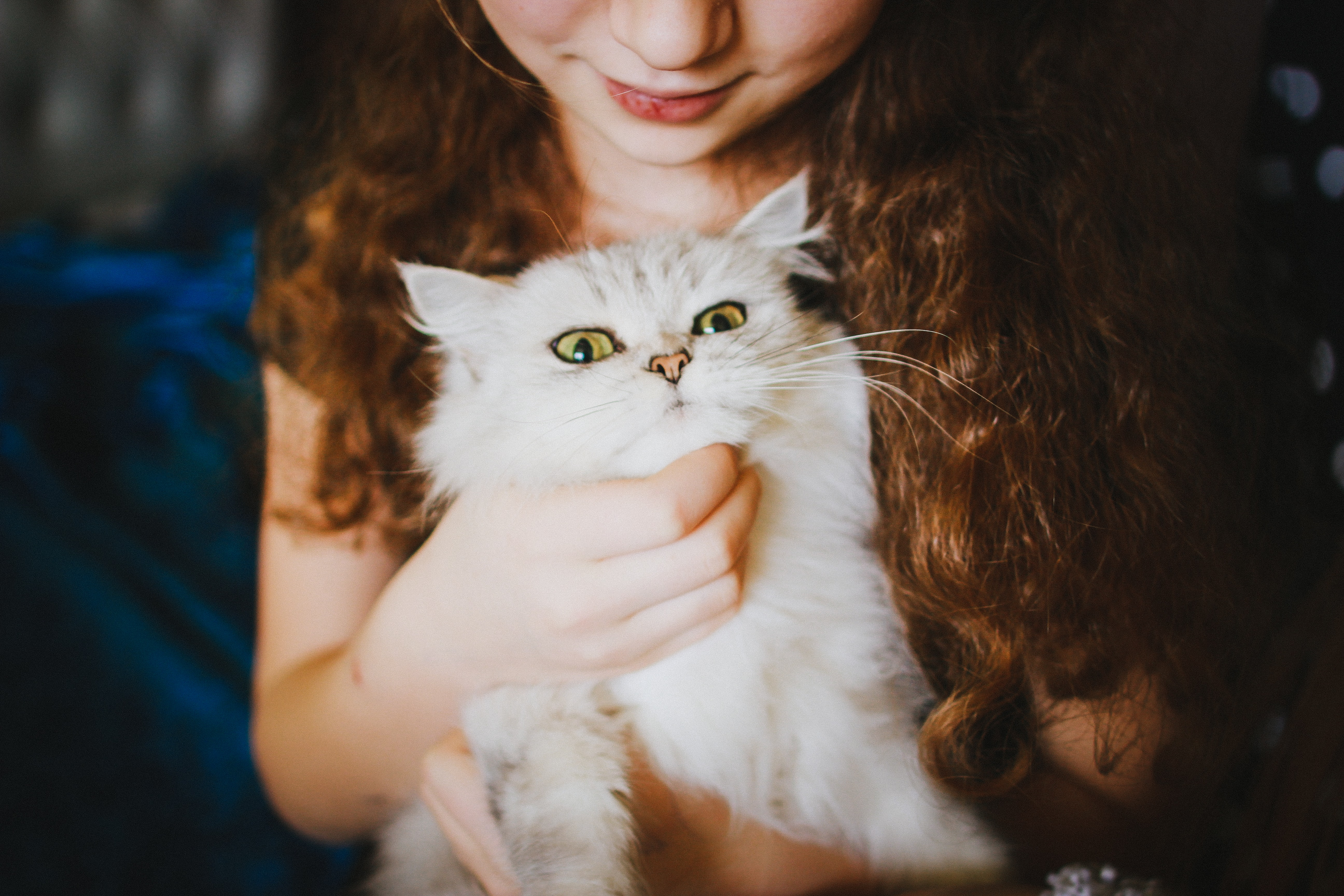 Young girl holds a fancy cat close to her