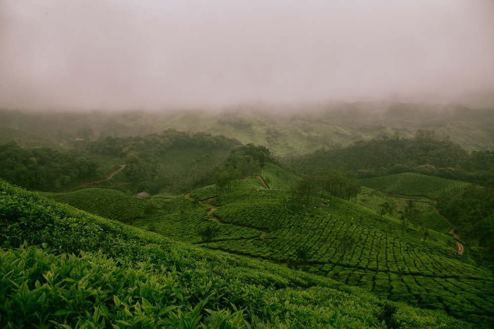hills covered with green plants \]