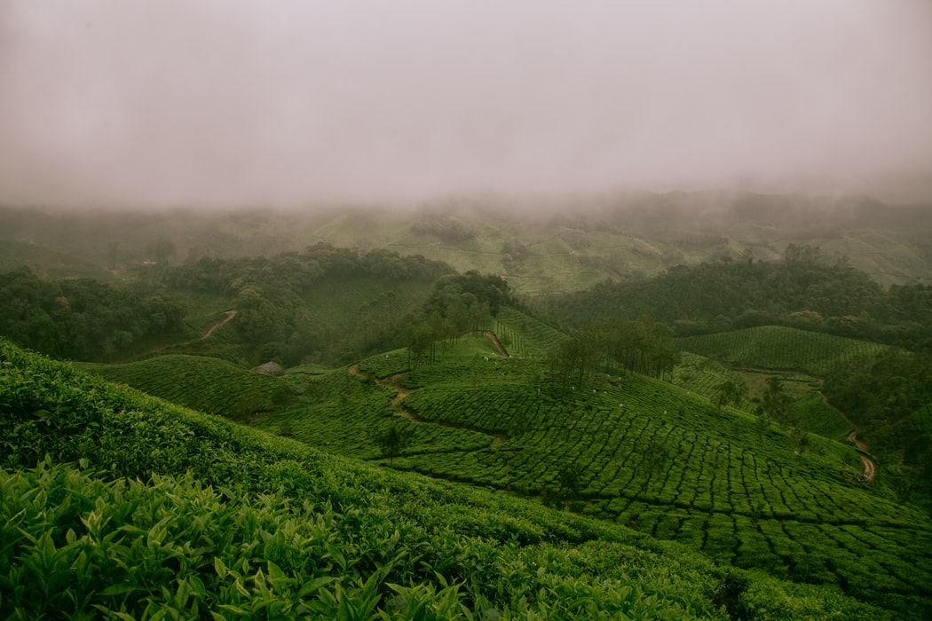 Kolukkumalai Tea Plantation