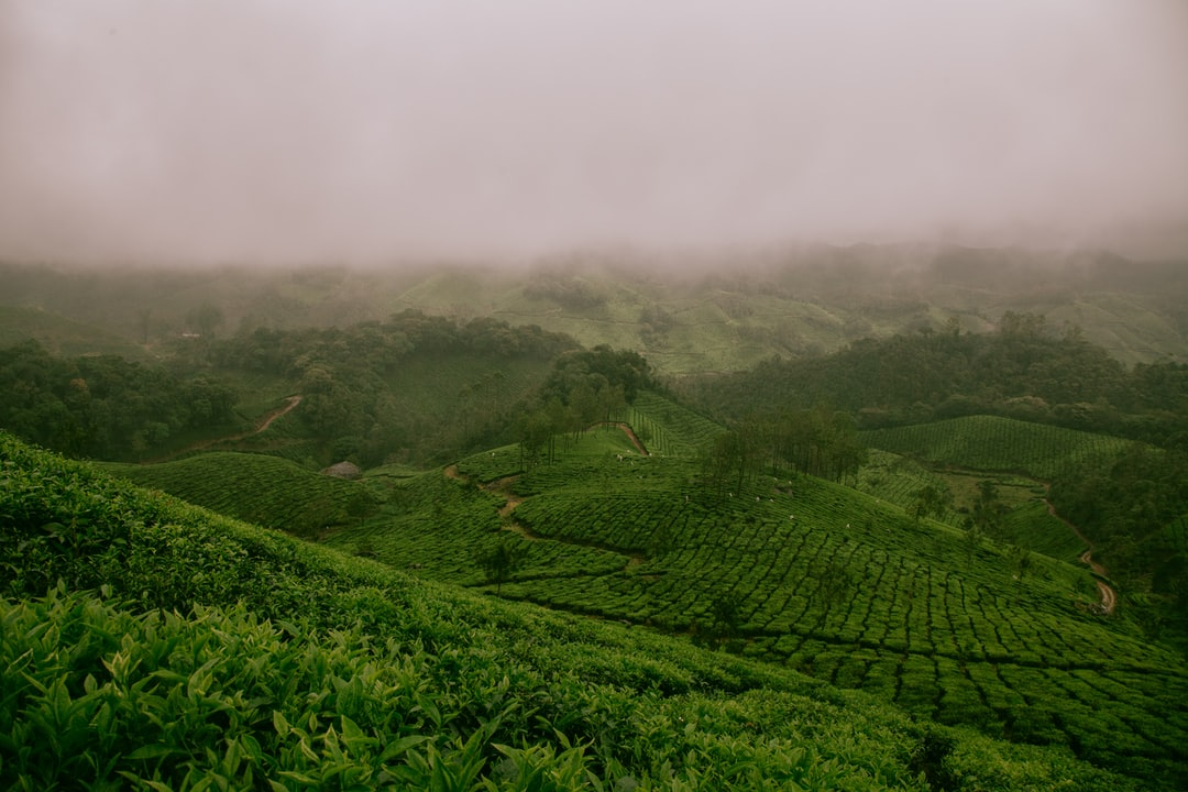 Farm Fields of Munnar