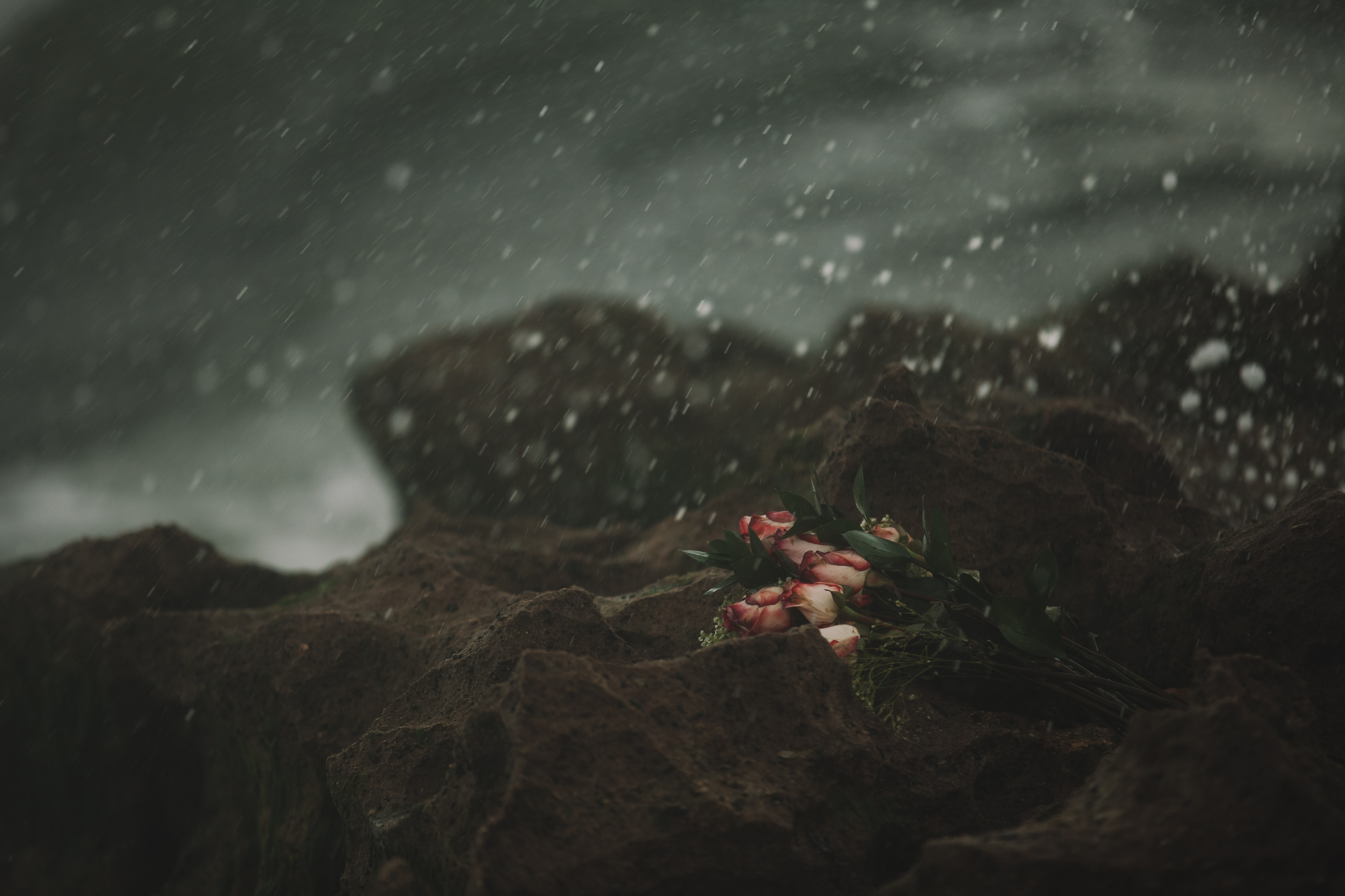 Bouquet of white and red roses on a stormy, snowy ocean beach