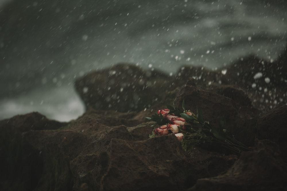 pink flowers on brown rocks