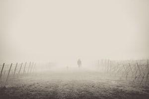 4611. Bor,szőlő, borászatok