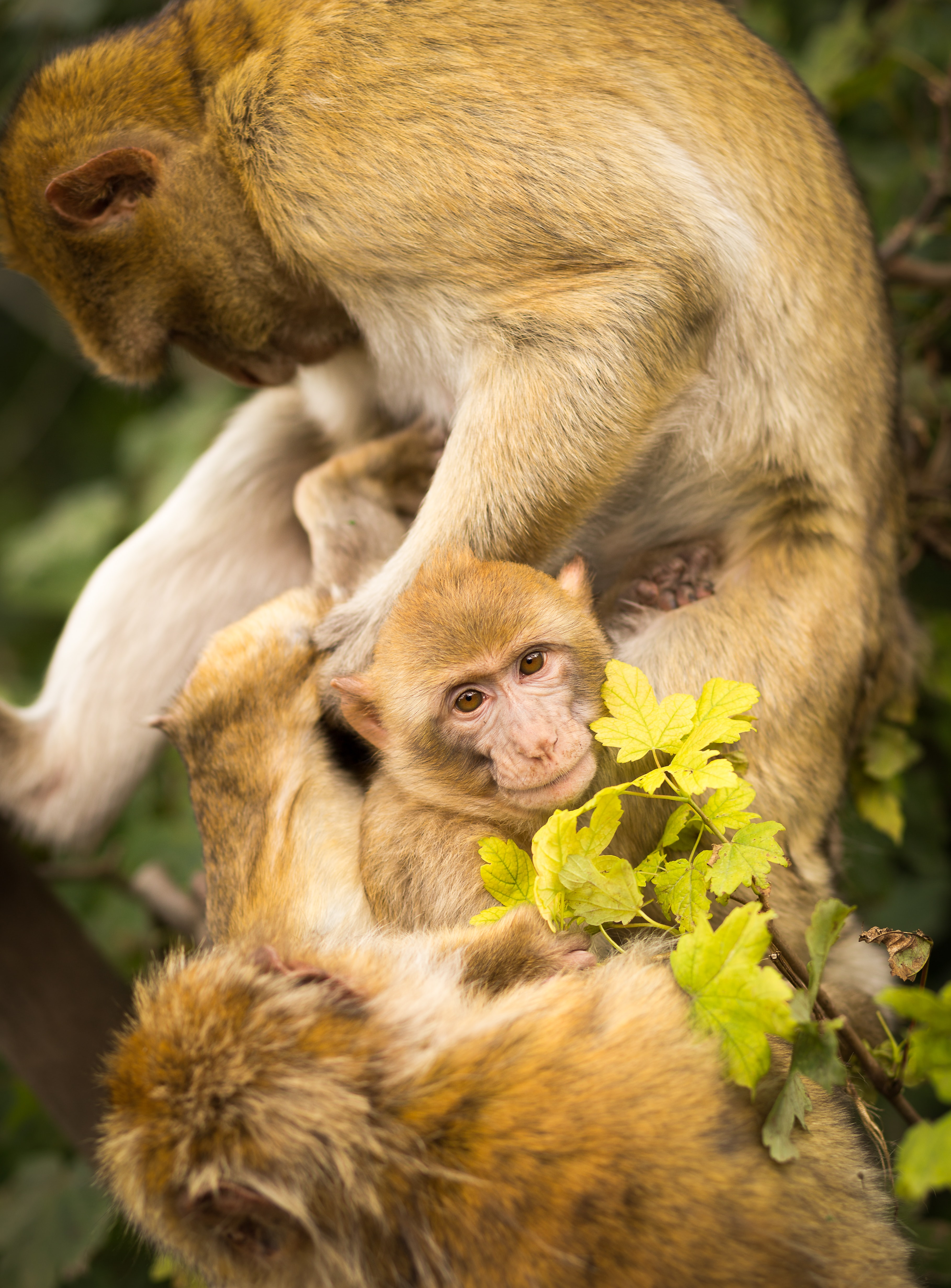 several monkeys on tree during day