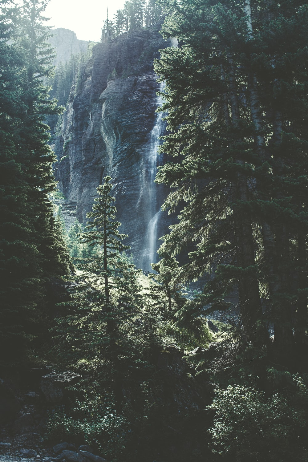 time lapse photo of falls on forest trees