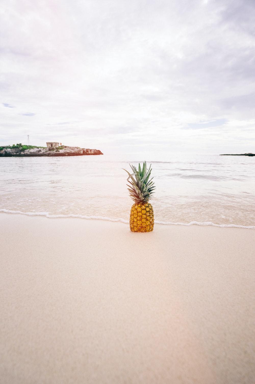 pineapple on sand near beach