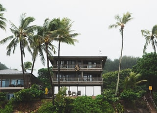 four green palm trees near white and black house