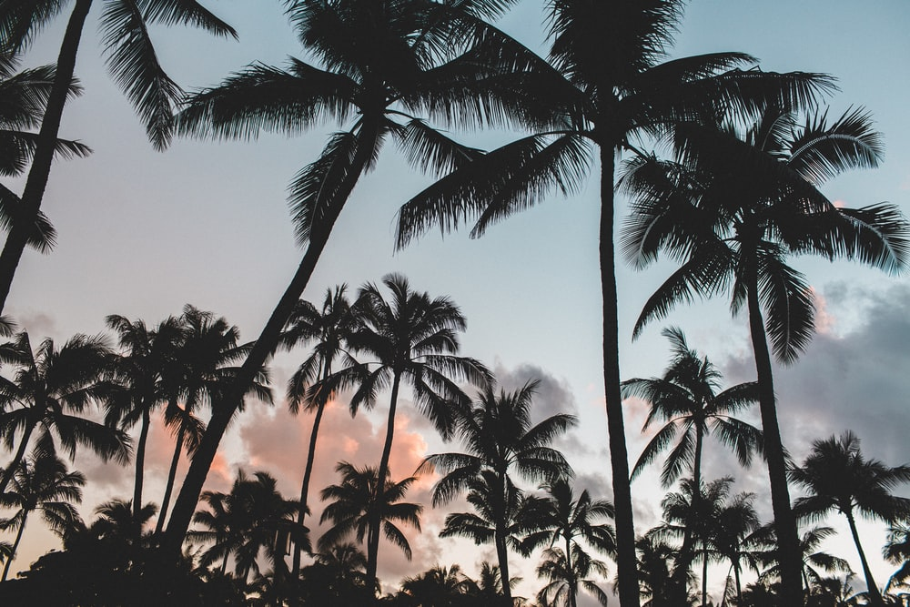 gray scale photography of coconut trees during daytime