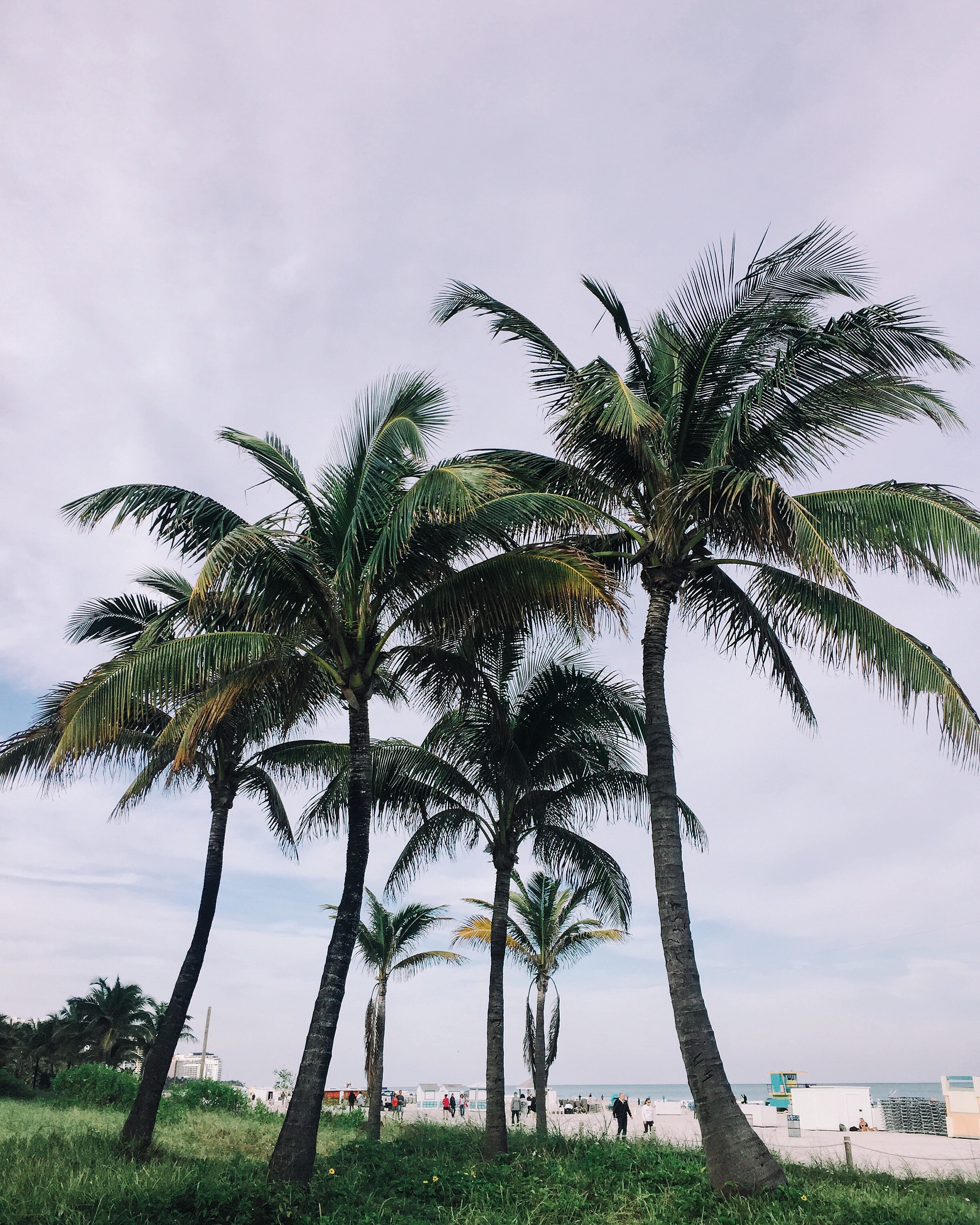 Palm trees on a coastline at South Beach, Miami Beach, Florida, United States