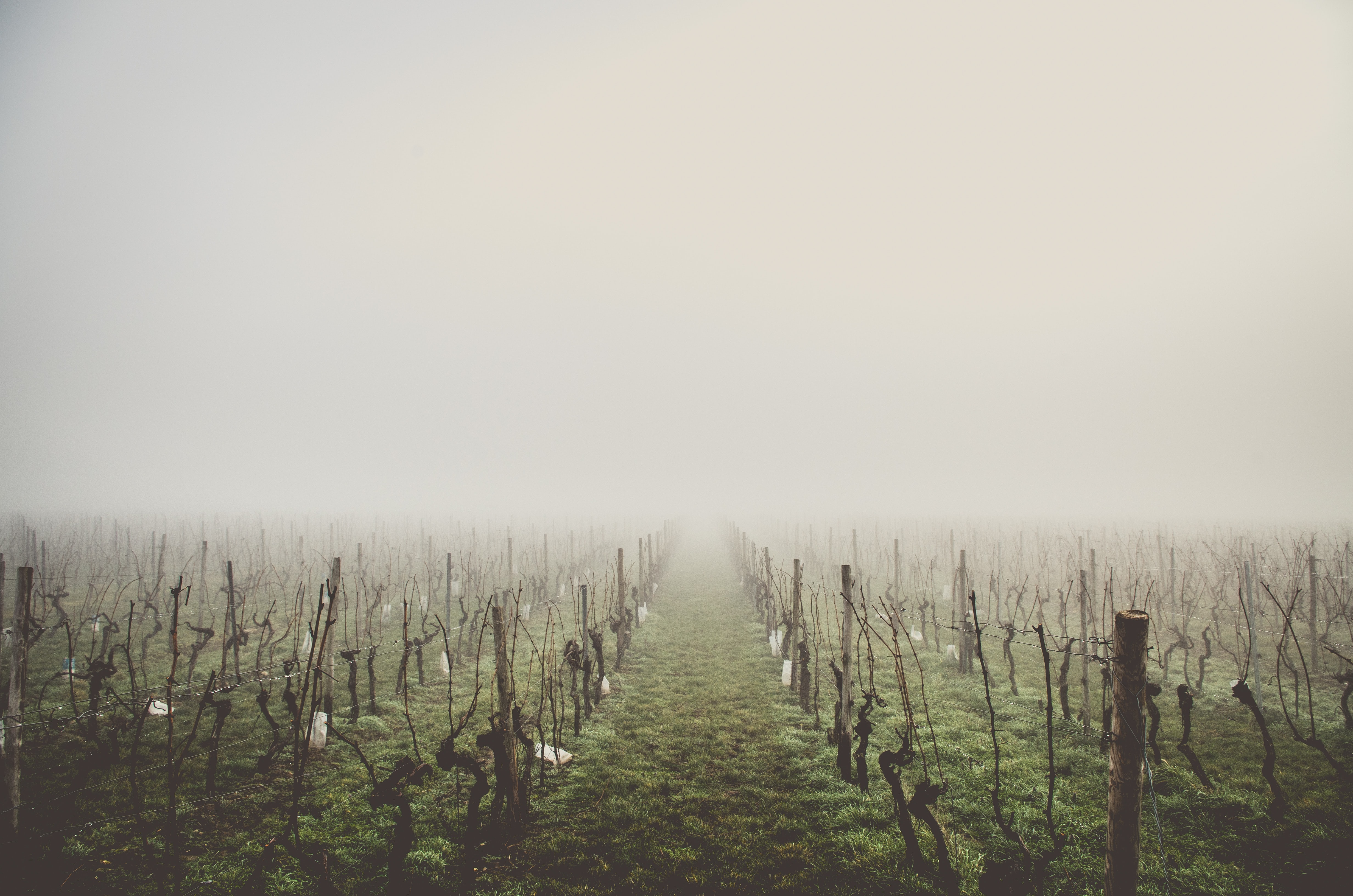 green fields with leafless trees on a foggy day