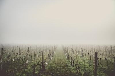 4612. Bor,szőlő, borászatok