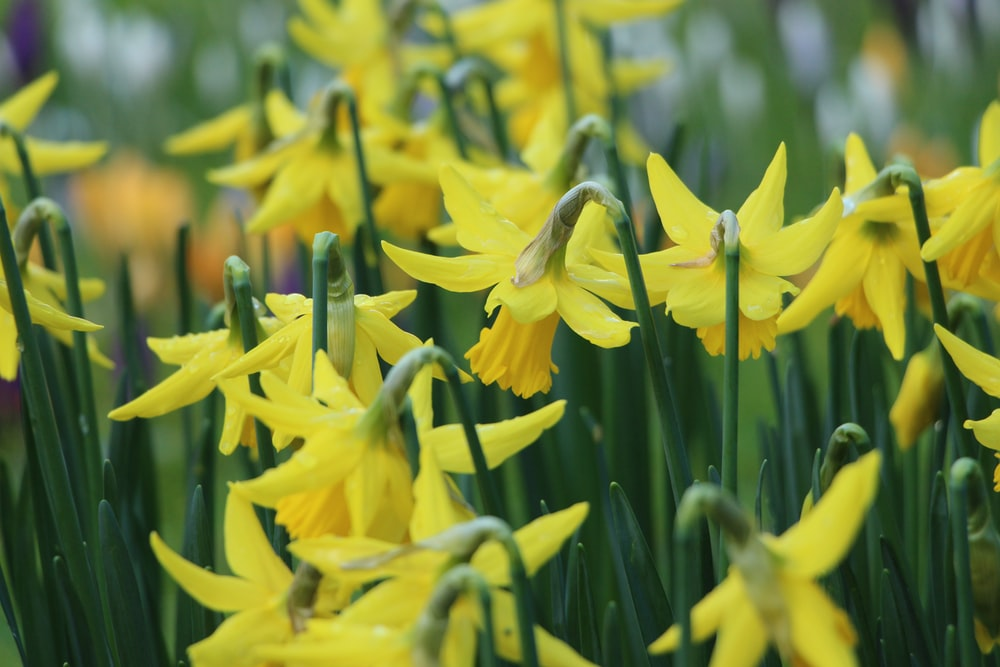 Spring flowers pictures download free images on unsplash yellow petaled flower field mightylinksfo