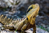 closeup photography of yellow and black lizard