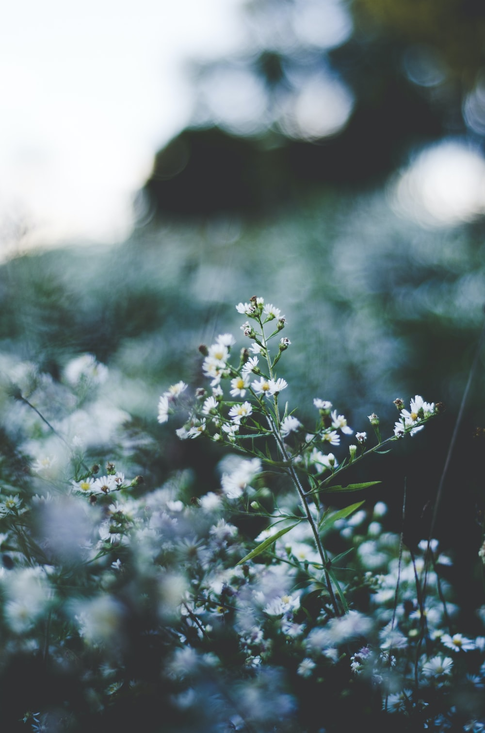 Iphone Wallpapers 19 Best Free Iphone Wallpaper Plant Wallpaper And Grey Photos On Unsplash