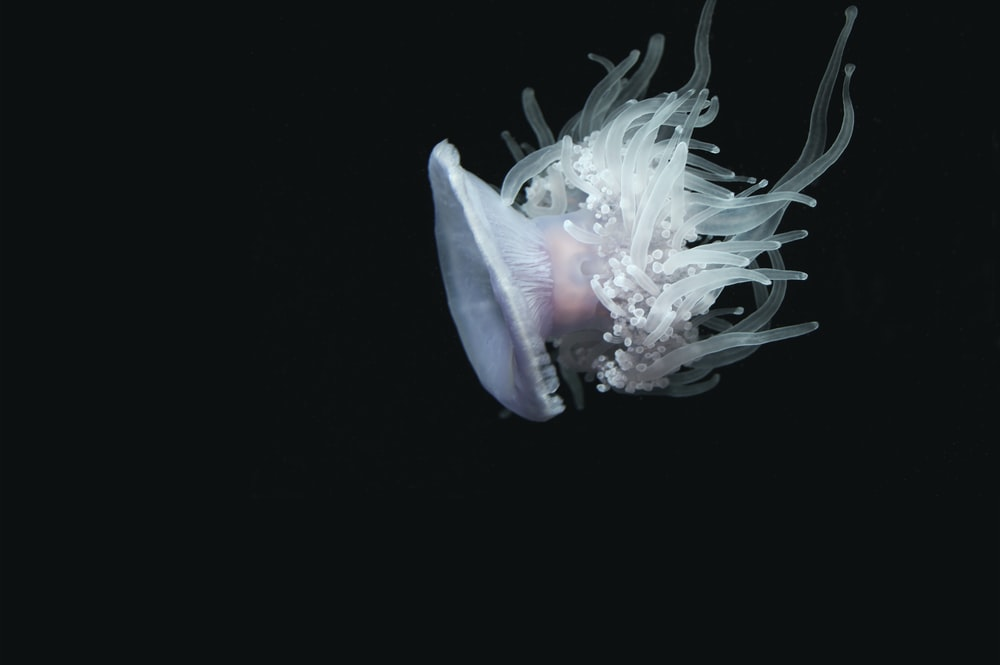 selective focus of white jelly fish
