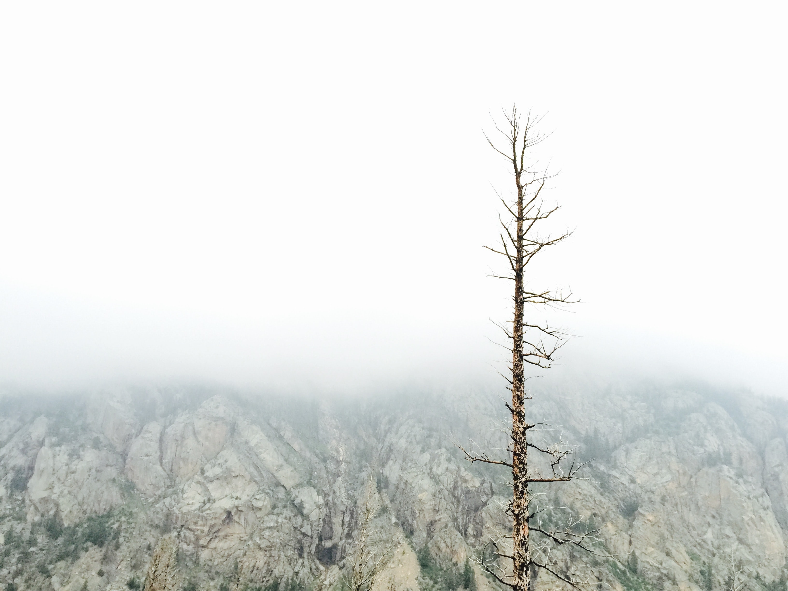 Single barren tree against a cliff in Rocky Mountain National Park