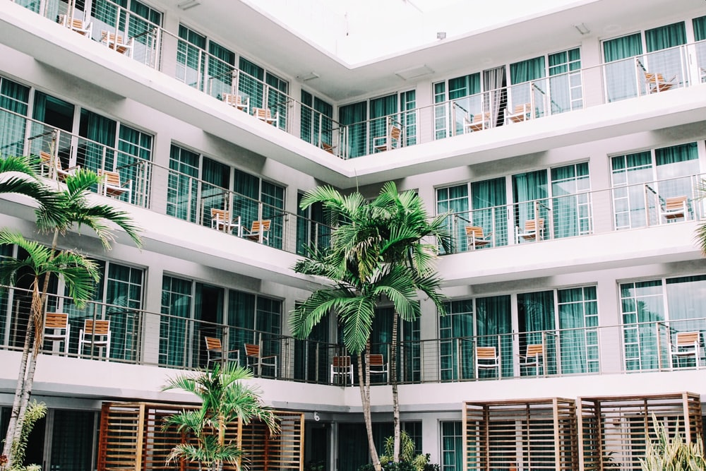 coconut palm trees in hotel lobby