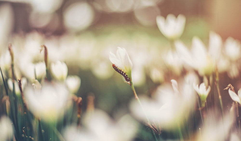 brown worm on white flower