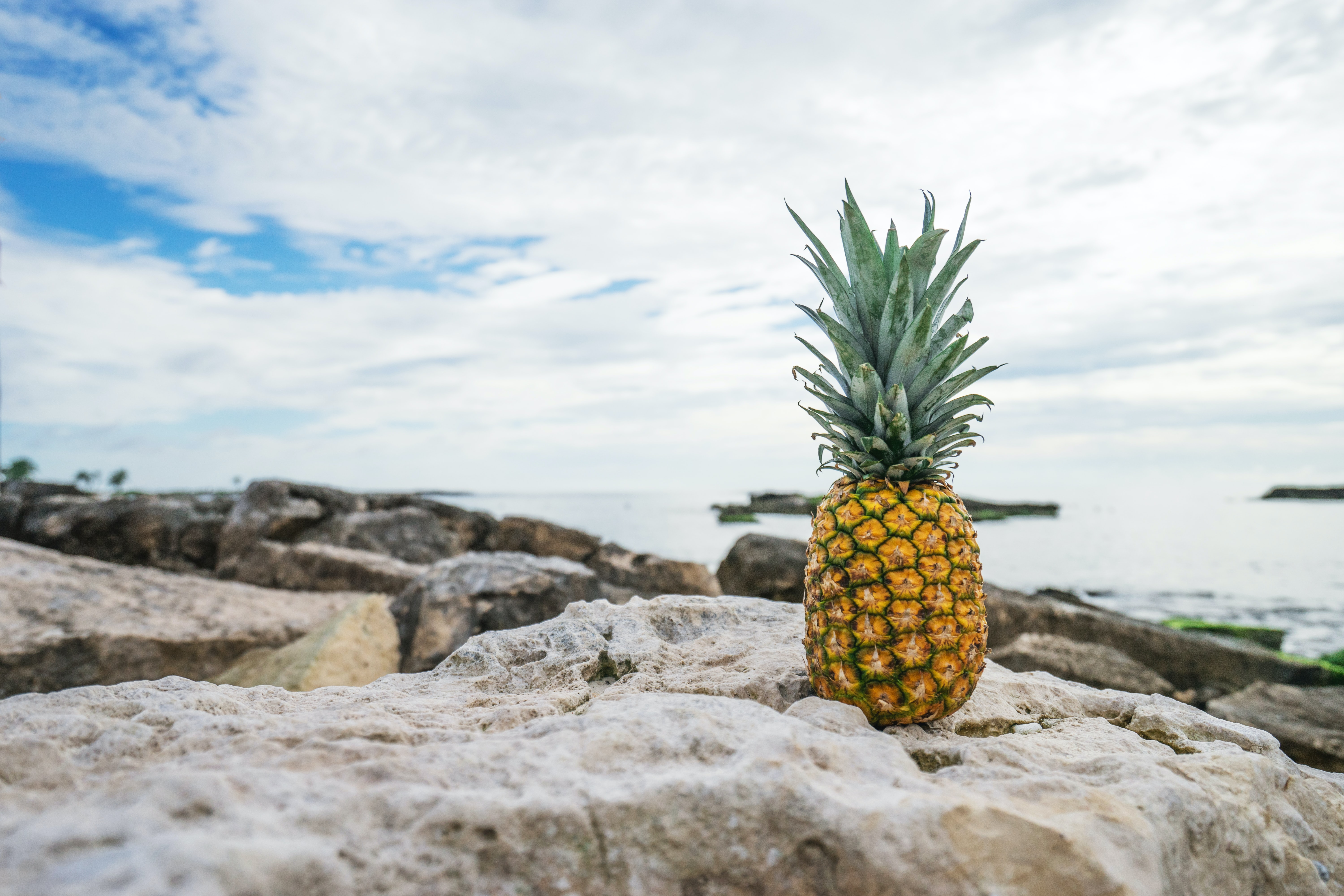 A pineapple sitting on a rock at the beach.
