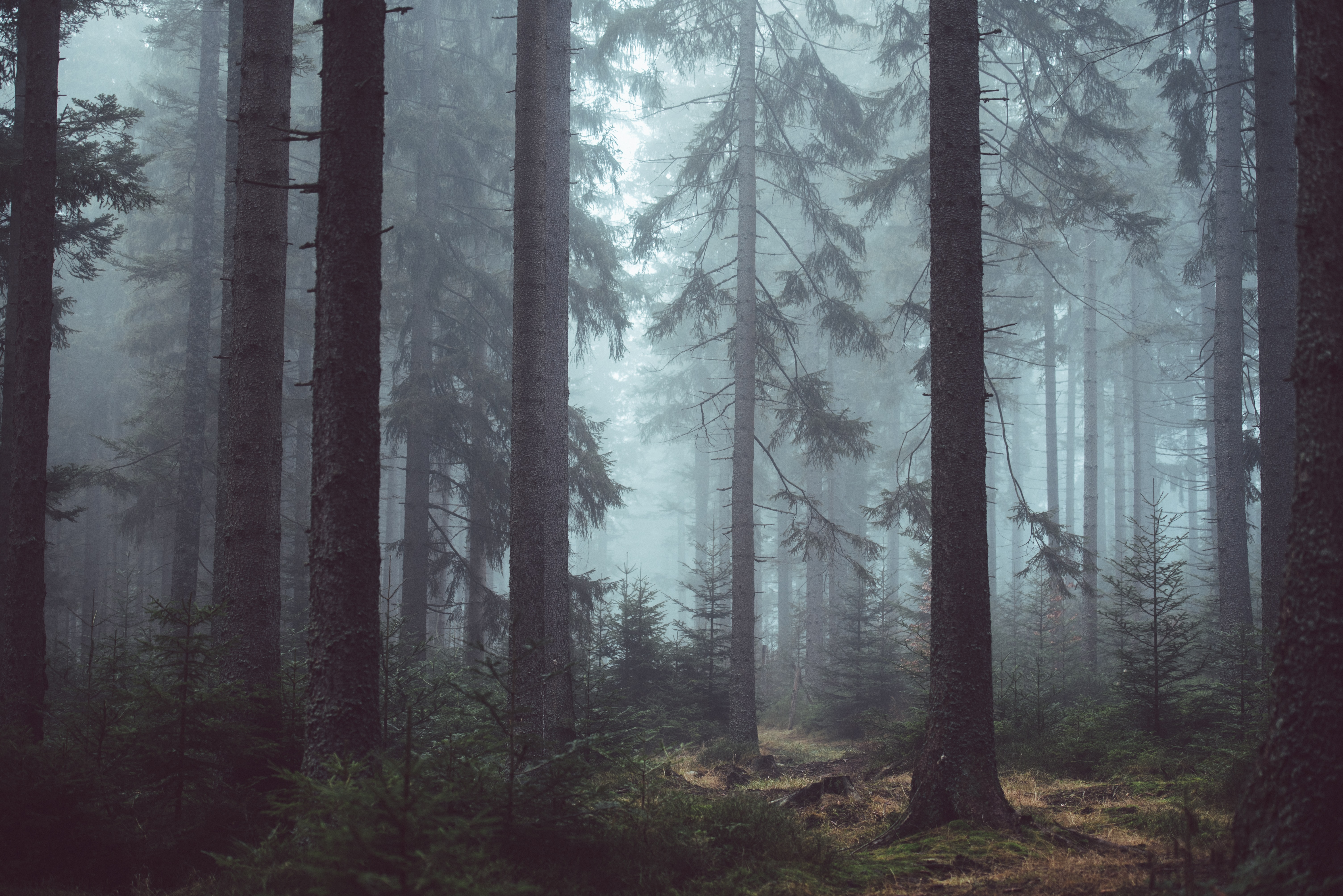 forest surrounded by fog during daytime