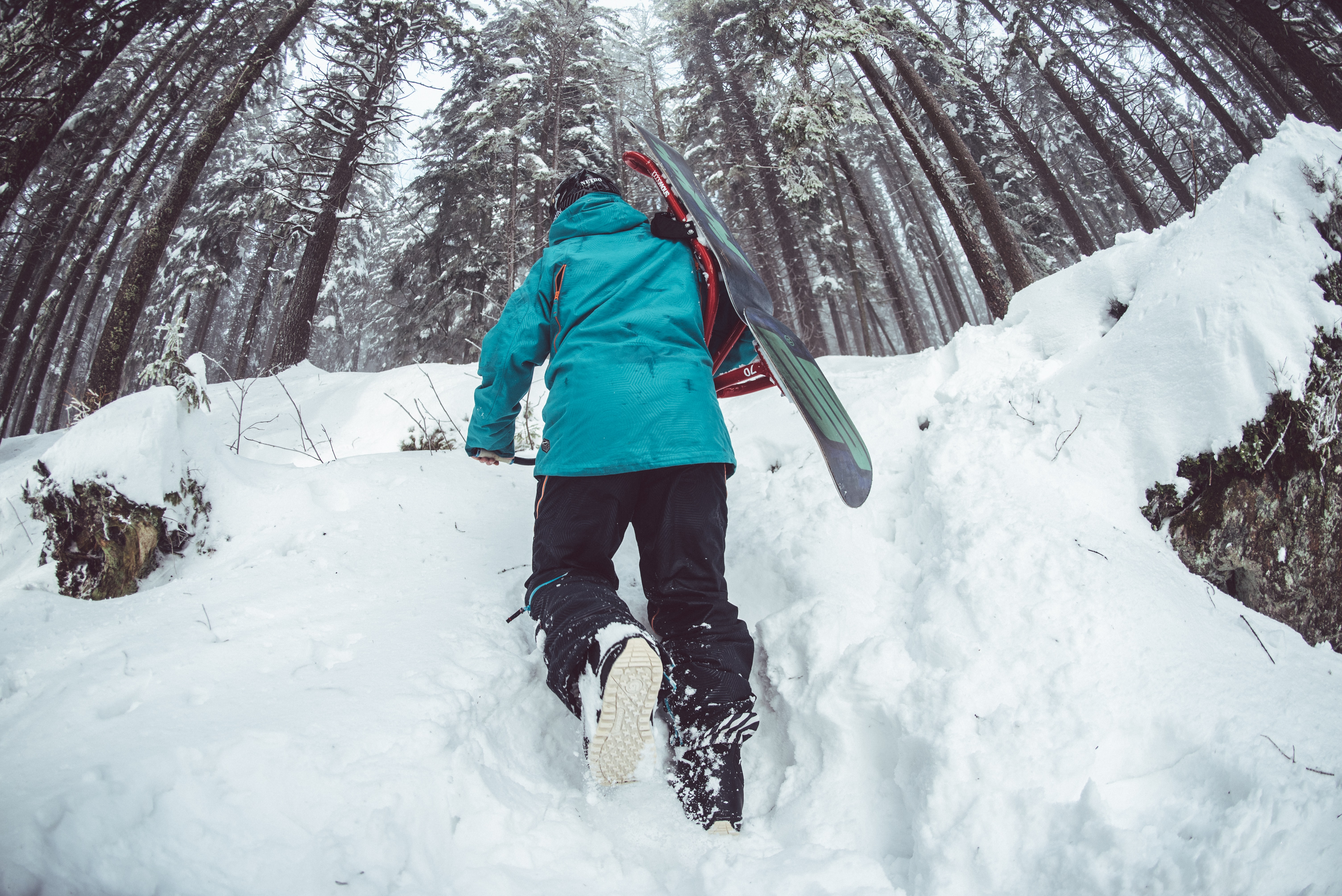 Snowboarder hiking up a trail with snow covered trees