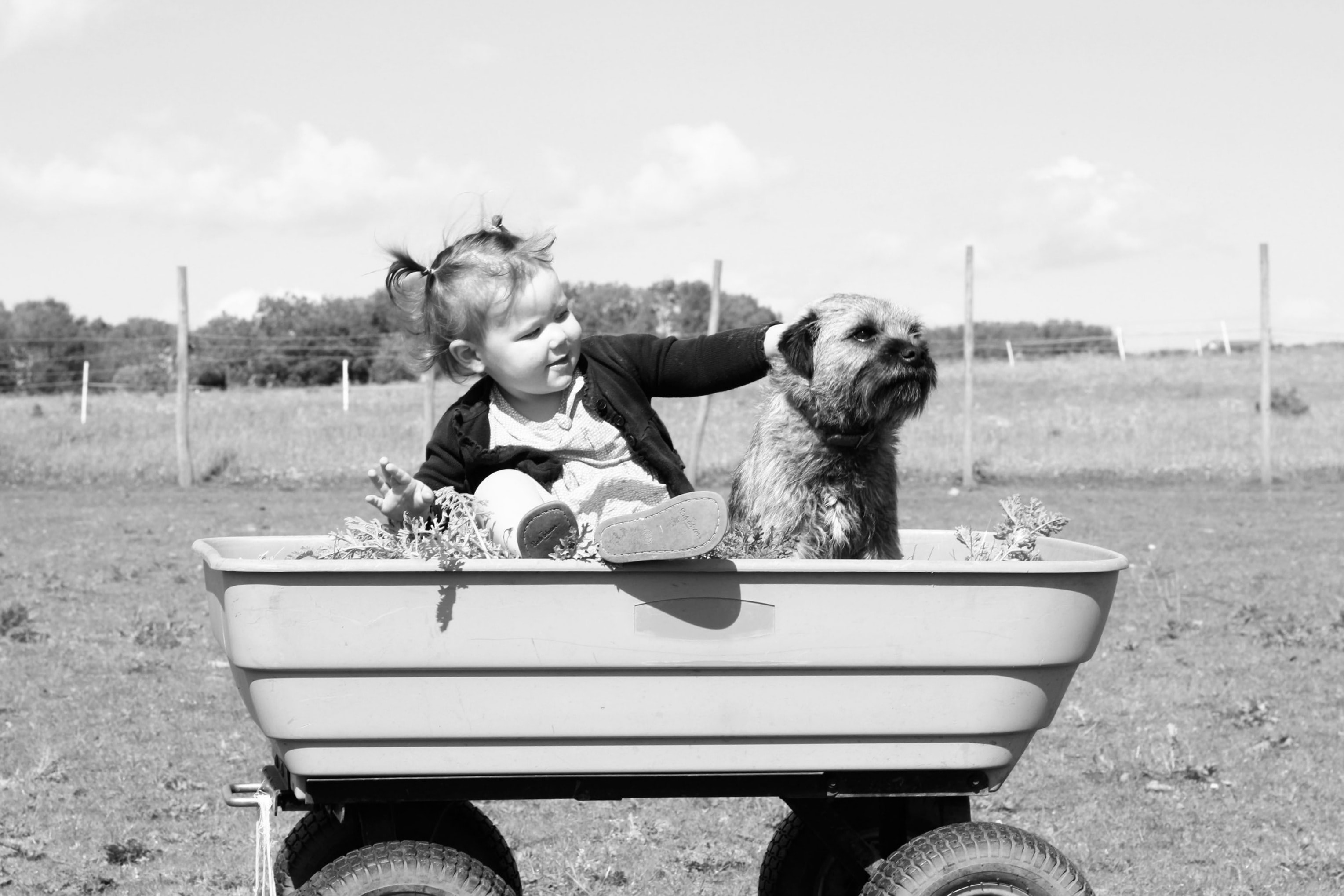 A little girl sitting in a wagon with a dog and plants