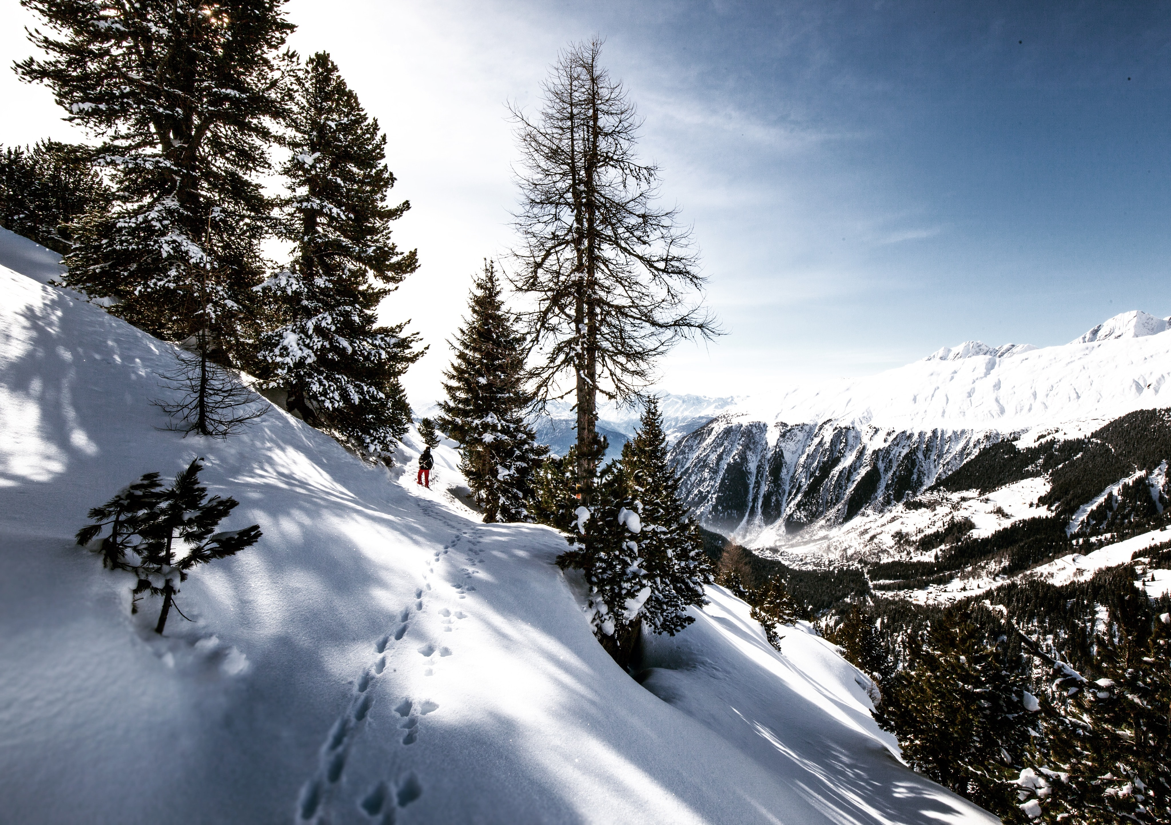 Downward slope of snow with several trees and mountains