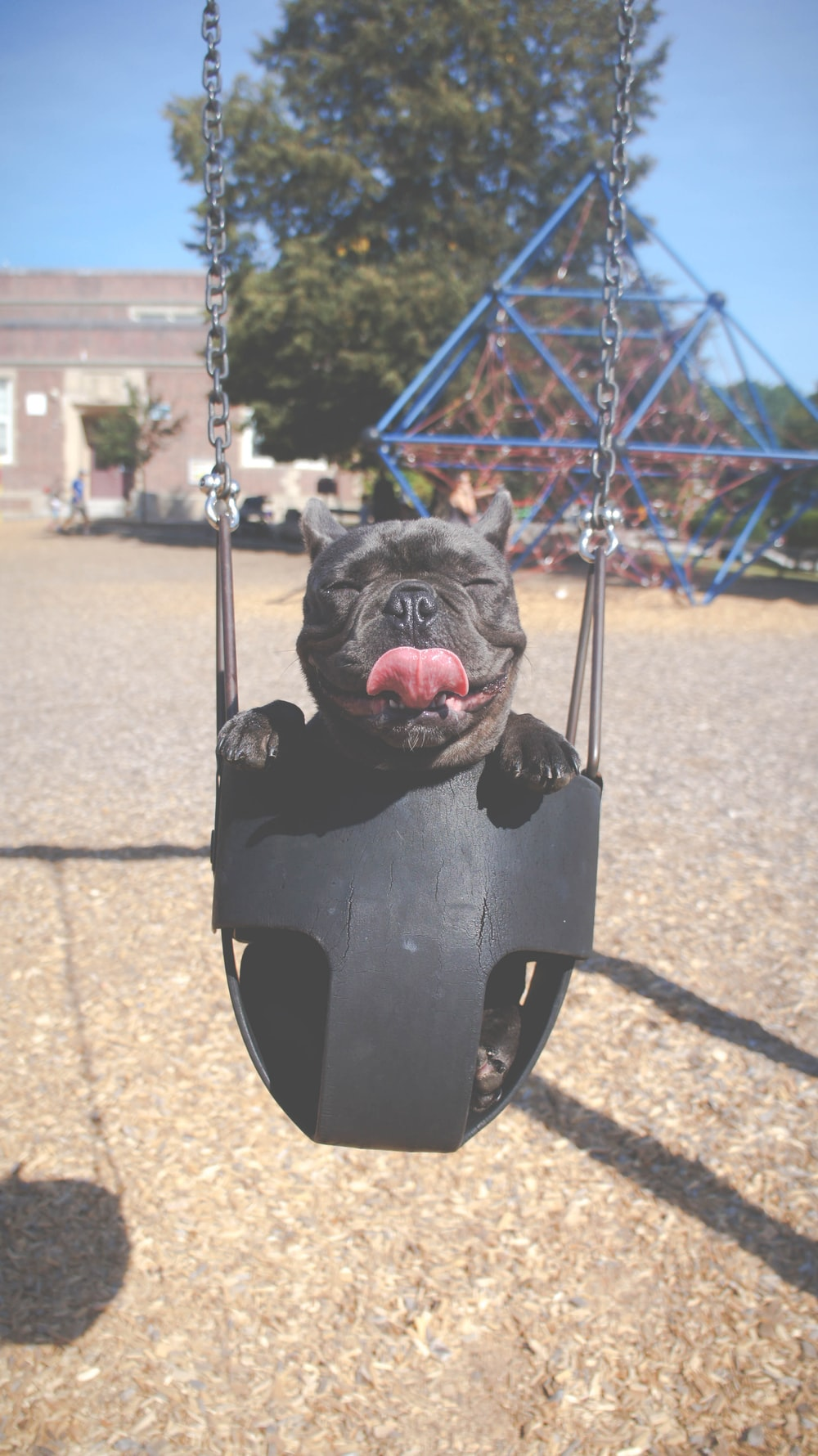 Dog sways in a child seat on a swing set